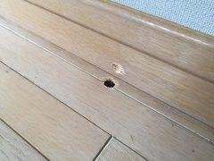 福岡市東区で床補修【フローリングに間違って開けたドリル穴を補修】